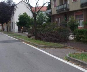 Nubifragio nella notte, danni in varie zone di Cernusco